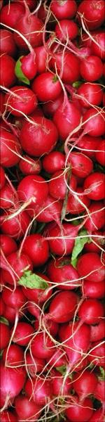 radishes1