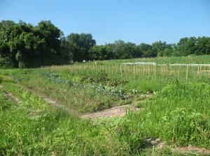 June 09 and farm pics 004